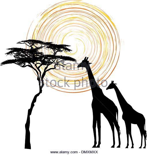 510x540 Acacia Tree Sunset Stock Vector Images