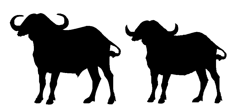 971x442 African Buffalo Clipart Silhouette