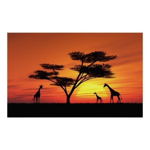 512x512 African Sunset Poster Sunset, African Sunset And Africans
