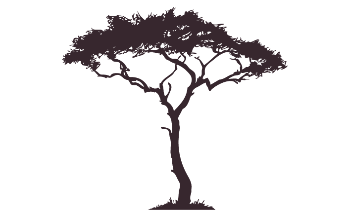 707x440 African Tree Decal