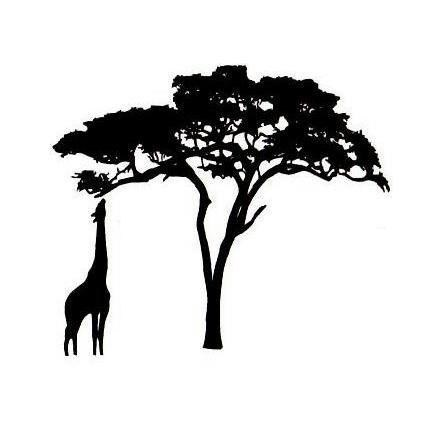 430x430 African Tree Silhouette Simple Simple Living Tree In The World