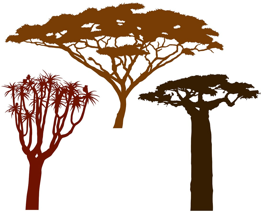 1089x890 African Trees