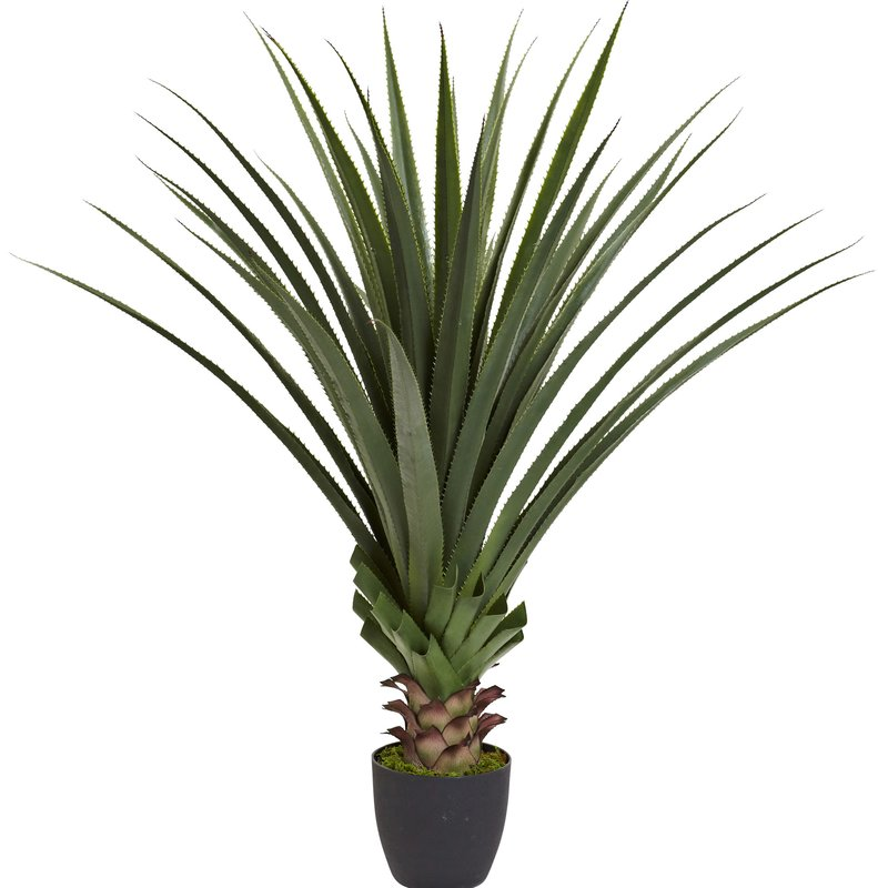 791x800 Spiked Agave Floor Plant In Pot Amp Reviews Allmodern