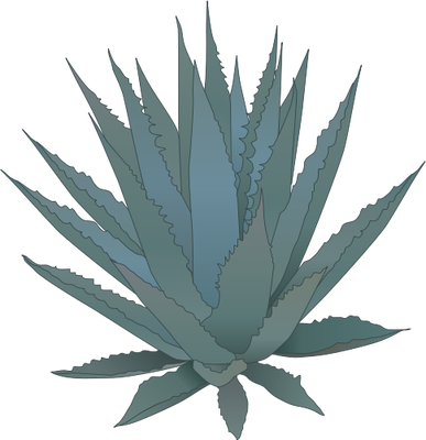 387x400 Agave.png Pixels Tatoo Ideas Plant Tattoo