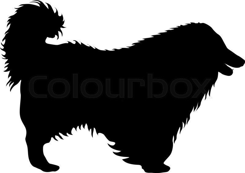 800x564 Airedale Terrier Dog Silhouette On A White Background. Stock