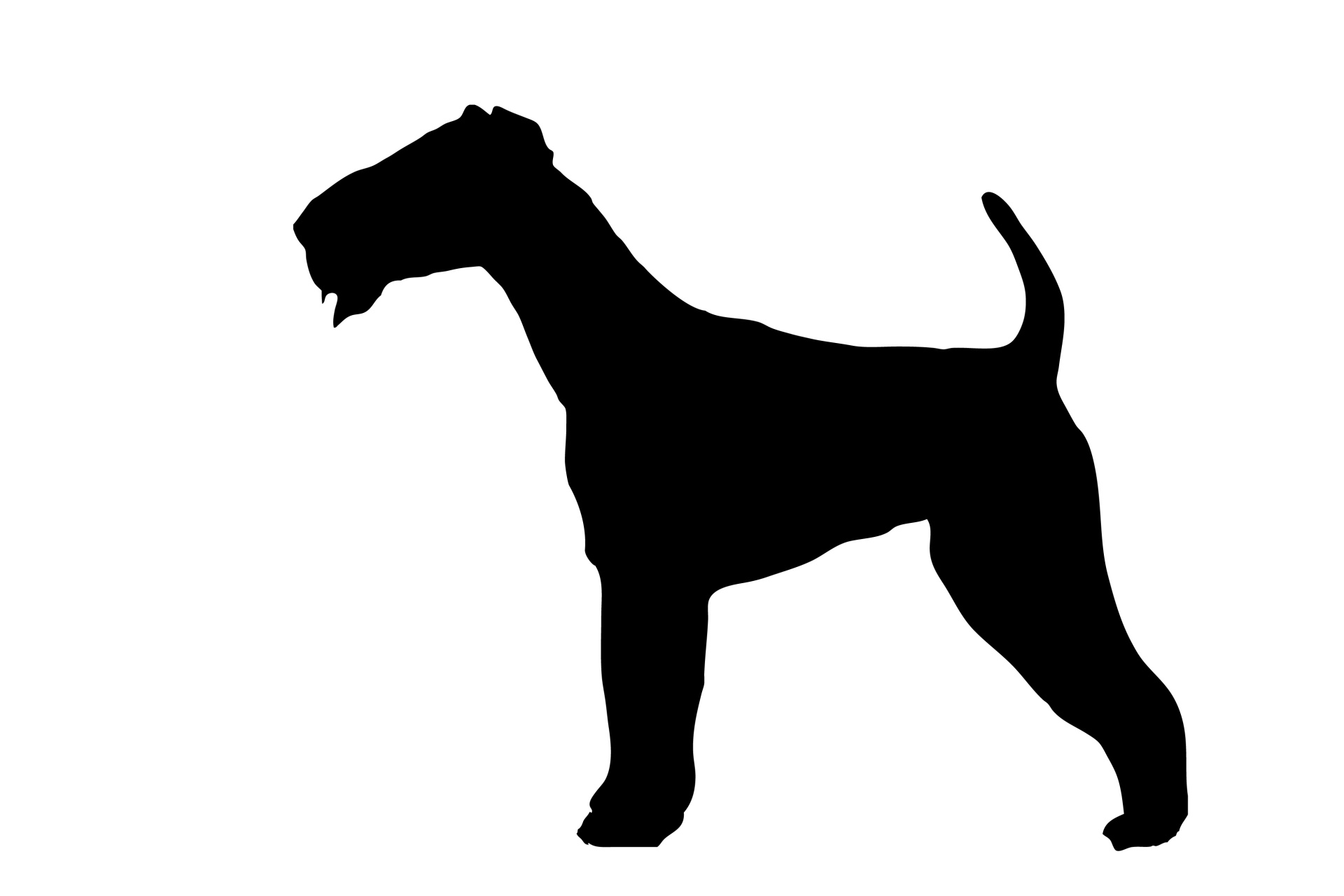 1920x1280 Dog, Airedale Black Silhouette Free Stock Photo