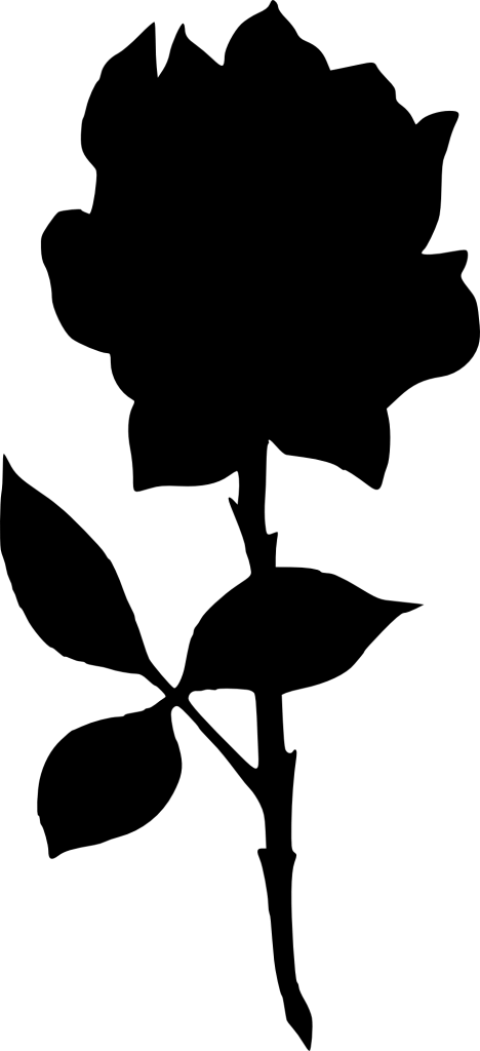 480x1051 Rose Silhouette Png