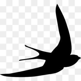 260x260 Bird Gulls Mollymawk Silhouette