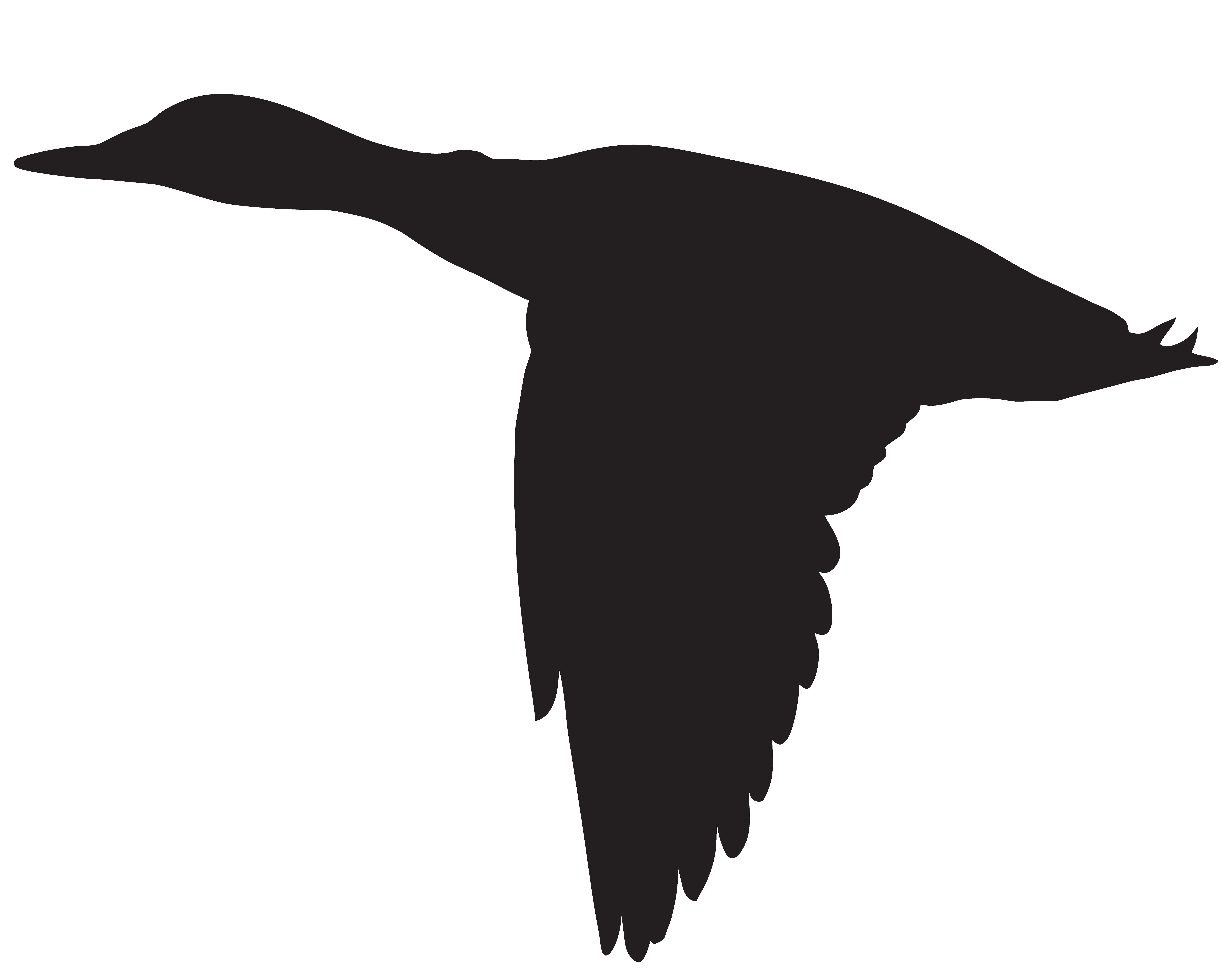 8000x6316 Duck Silhouette Clipart