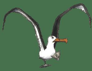 298x229 High quality Albatrosses transparent png images