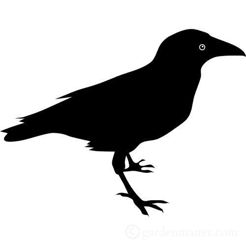 500x500 Scary Bird Silhouette For Halloween