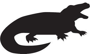 300x179 Free Alligator Gifs