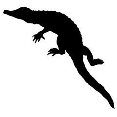 240x240 Crocodile Or Caiman. Black Vector Silhouette Of An Alligator