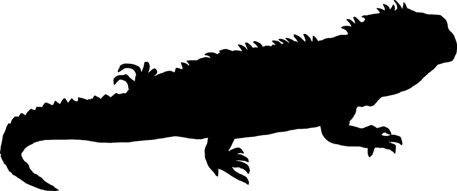1600x669 Iguana Clipart Silhouette
