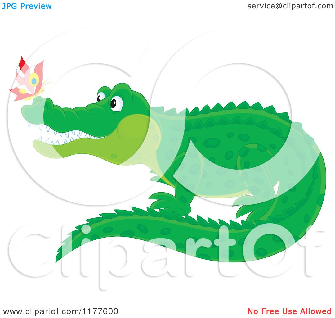1080x1024 Cartoon Of A Butterfly On A Crocodiles Nose