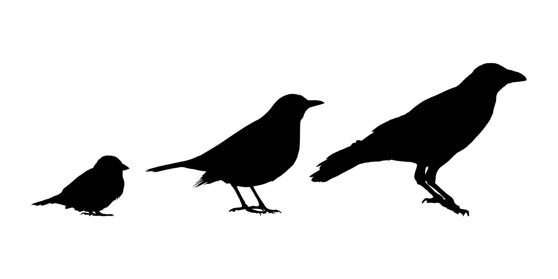 1920x960 Bird Identification Basics Great Missouri Birding Trail