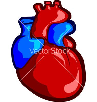 380x400 Realistic Heart Clipart