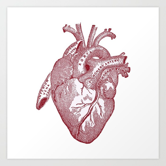 700x700 Anatomical Heart Gallery
