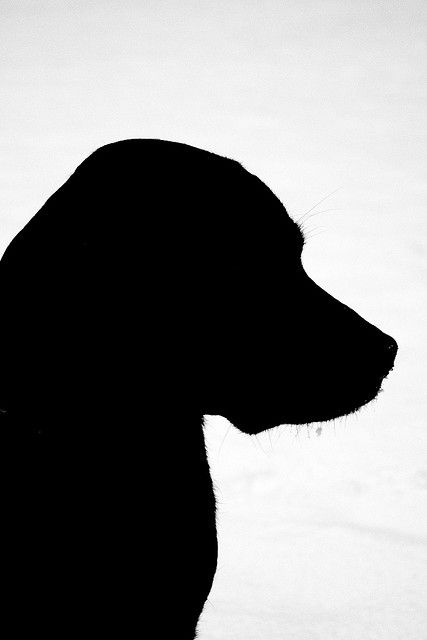 427x640 Emma's Silhouette Dog Silhouette, Upper Body And Silhouettes
