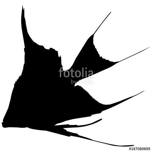 500x500 Angel Fish Stock Image And Royalty Free Vector Files On Fotolia