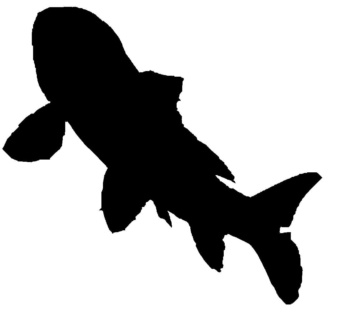 1080x1030 Angelfish Silhouette