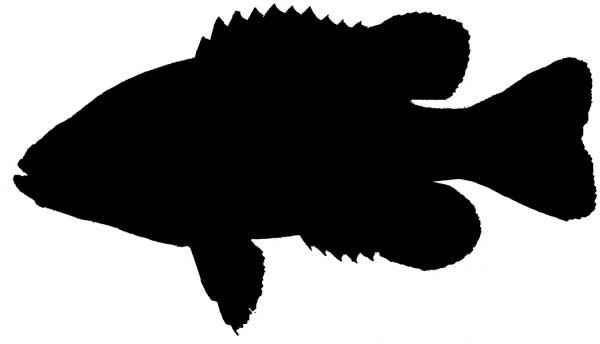 600x344 Fish Clipart Silhouette