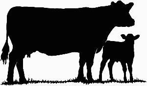 300x176 Show Heifer Clip Art Cow Silhouette 1 Decal Sticker Cows
