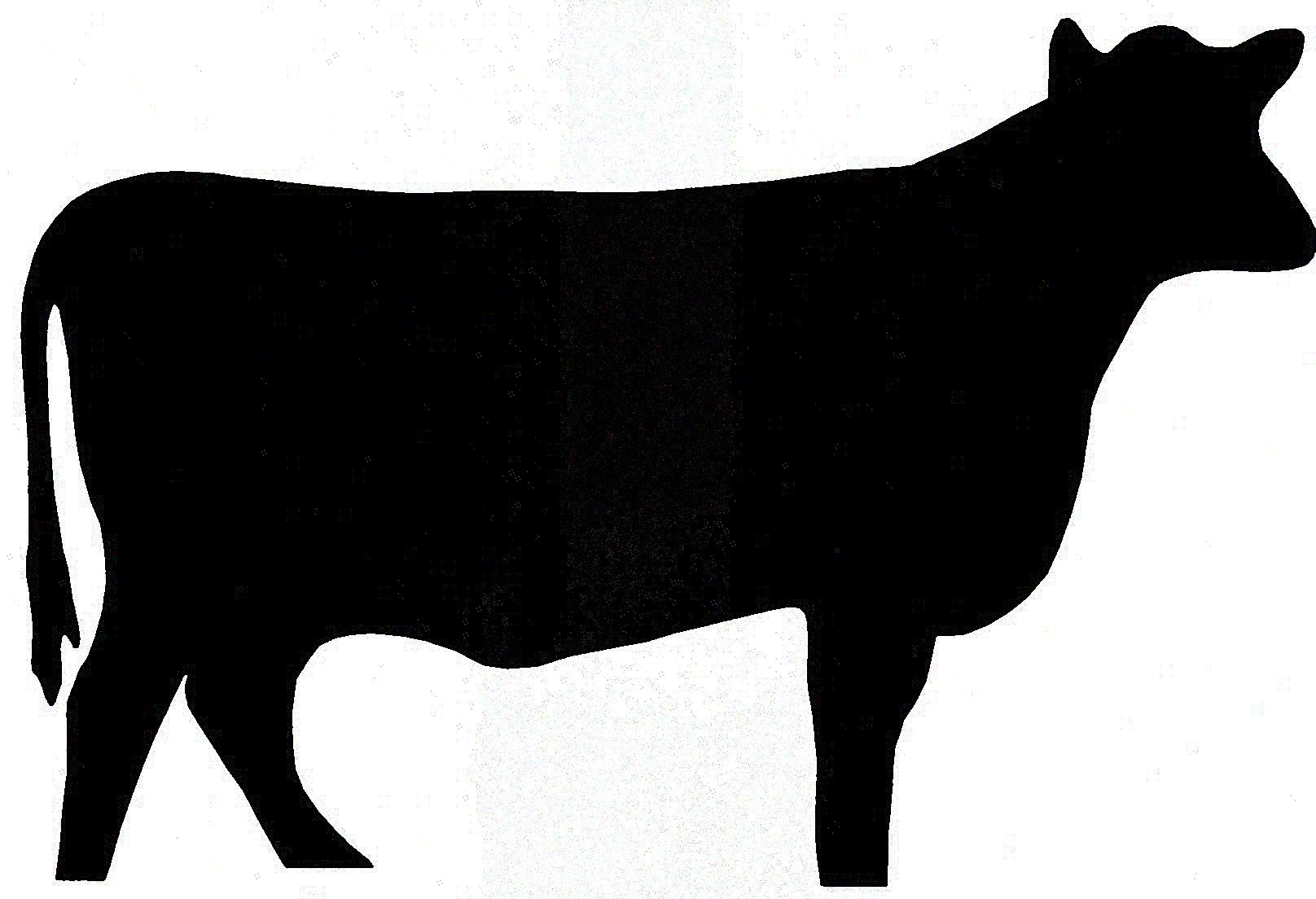 1616x1104 Clip Art Steer Head Clip Art