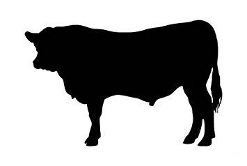 355x238 Angus Cow Bull Cattle Decal Sticker, Die Cut Vinyl