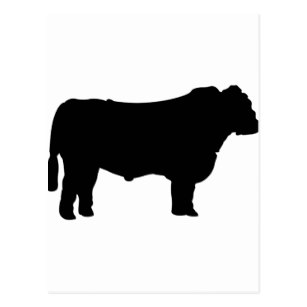 307x307 Angus Cattle Gifts Amp Gift Ideas Zazzle Uk