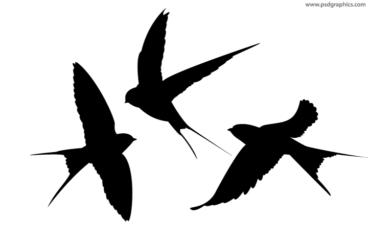 720x480 Swallows Vector Silhouettes Psdgraphics