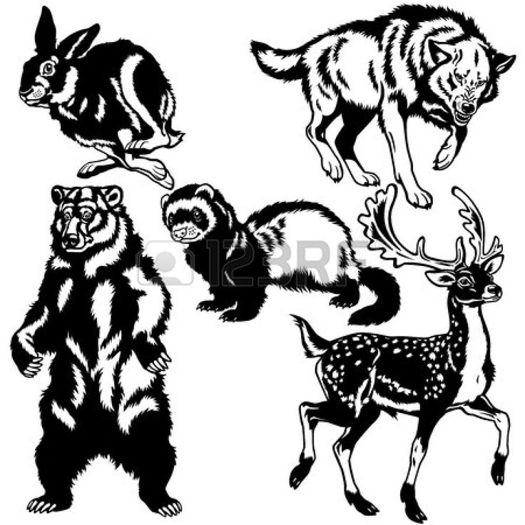 736x736 23 Best Clipart Images On Fox, Foxes And Silhouette
