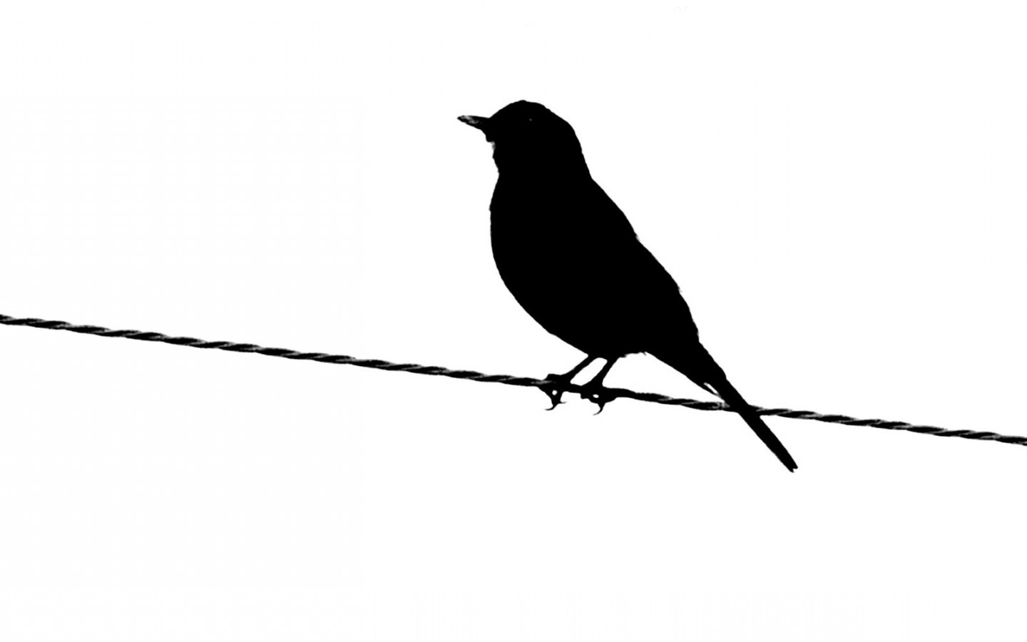 1440x900 Black And White Images Of Birds 24 High Resolution Wallpaper