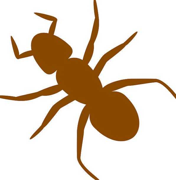 596x609 Ant, Bug, Silhouette, Outline, Insect, Brown, Chocolate, Antennas