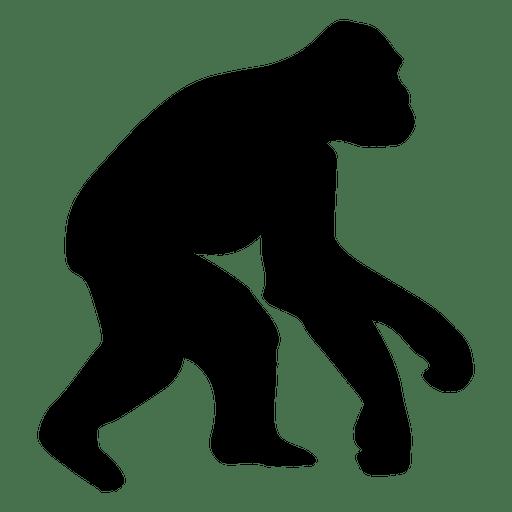 512x512 Evolution