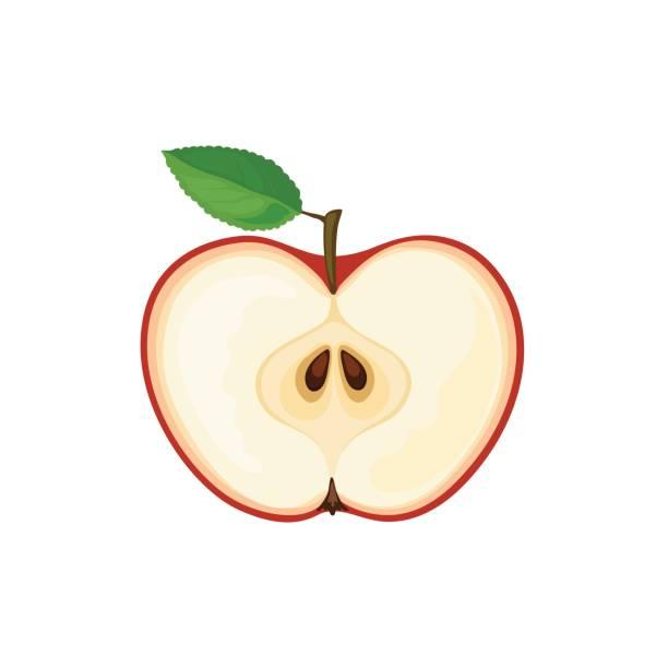612x612 Clip Art Half Apple