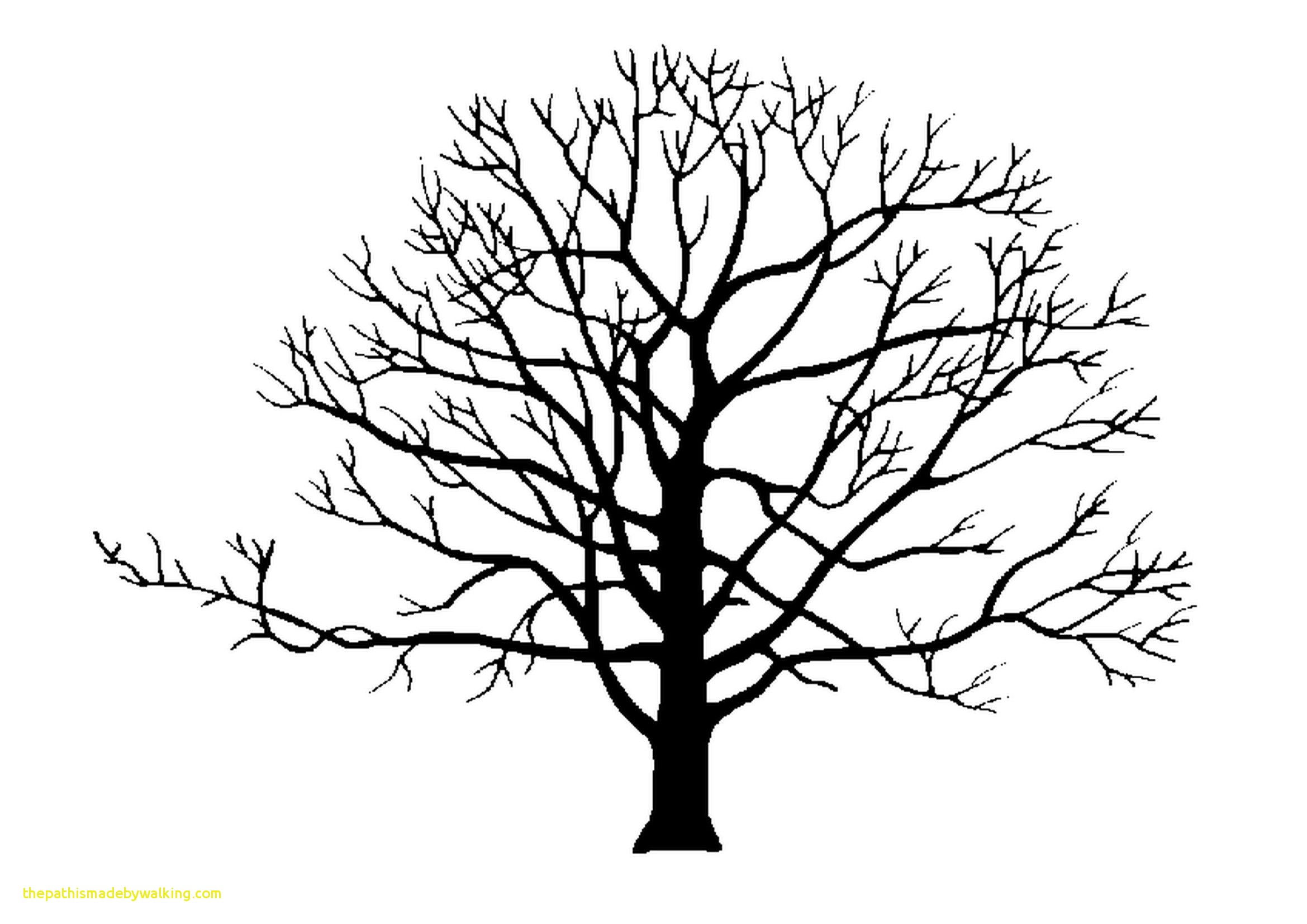 2339x1654 Apple Tree Branch Drawing Lovely Silhouette Tree Branches Google