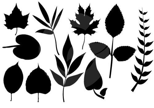 500x350 Leaf Silhouette Clip Art Vector Art