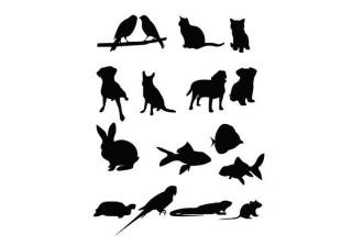 320x224 Pet Supplies