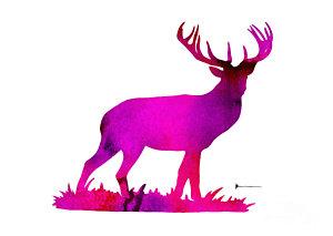 300x213 Watercolor Deer Paintings Fine Art America