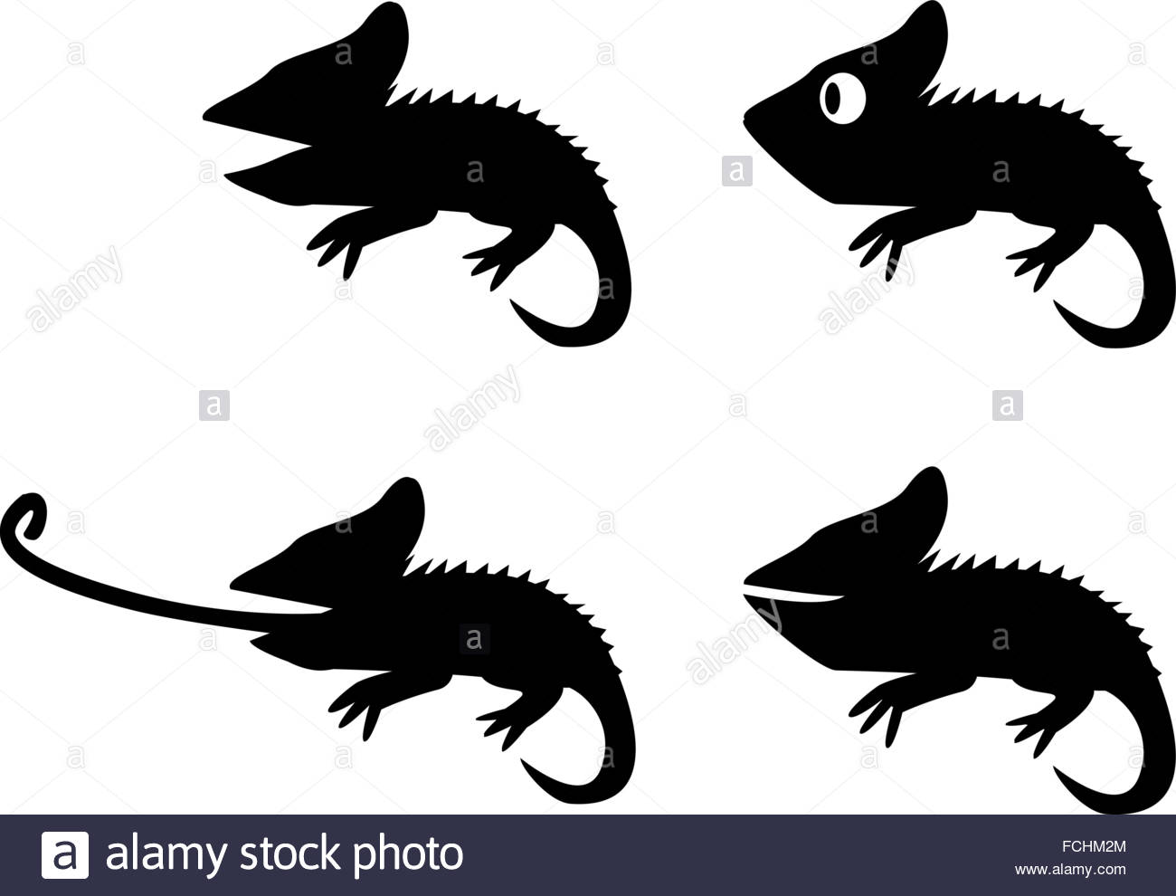 1300x990 Gecko Black And White Stock Photos Amp Images