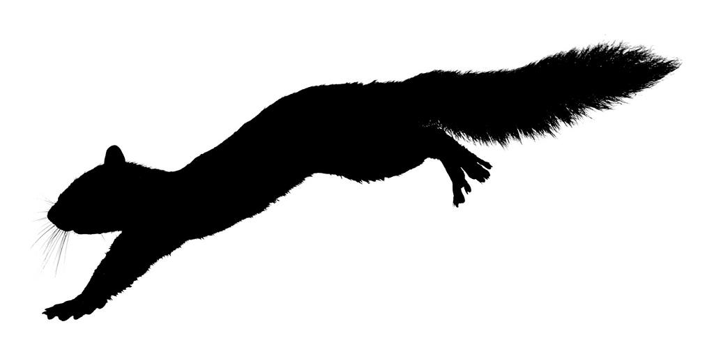 1024x488 Best Squirrel Silhouette