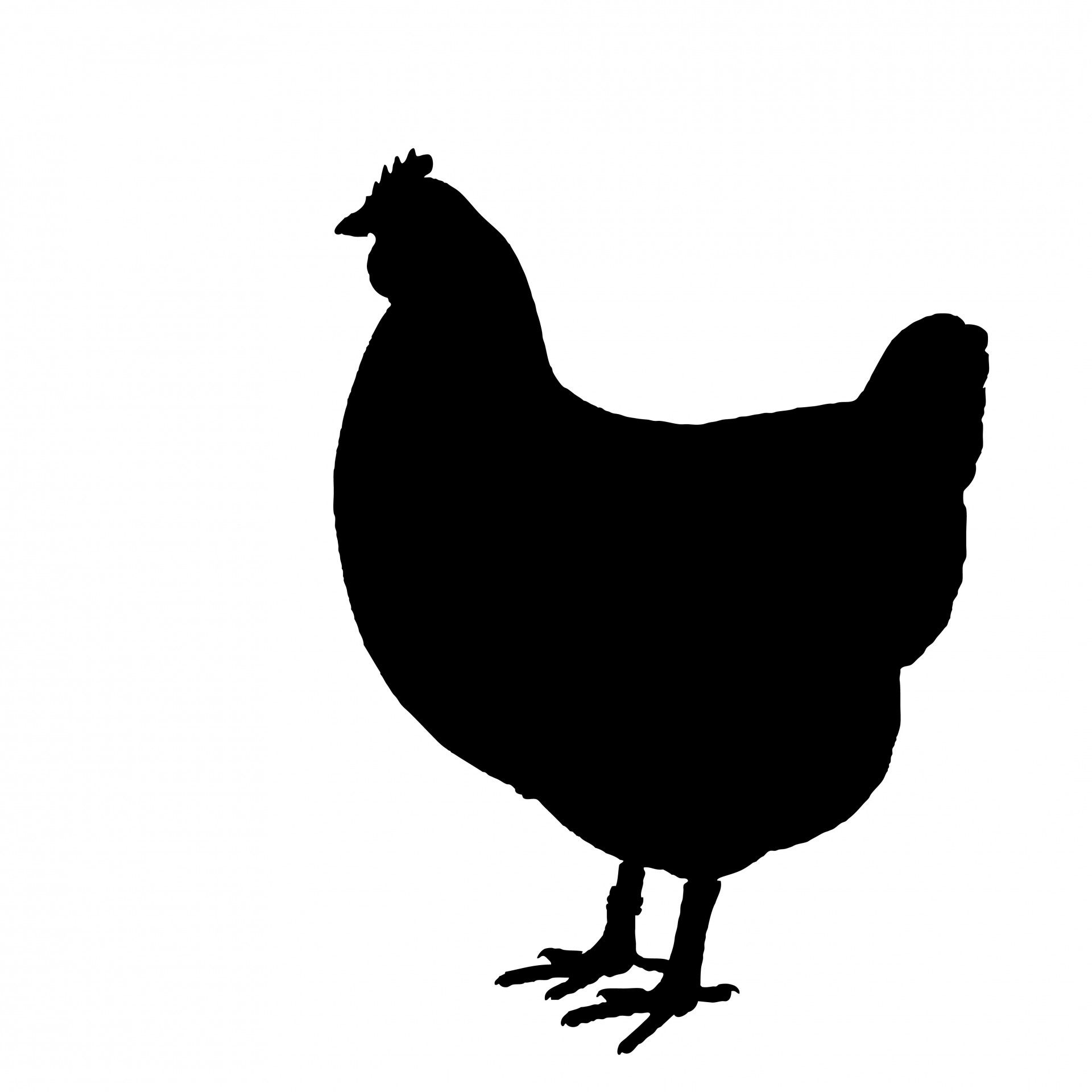 1920x1920 Chicken Silhouette Clipart Free Stock Photo