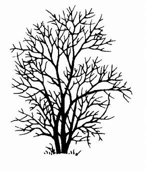 292x344 Image Result For Ash Tree Silhouette Ash Trees Ash