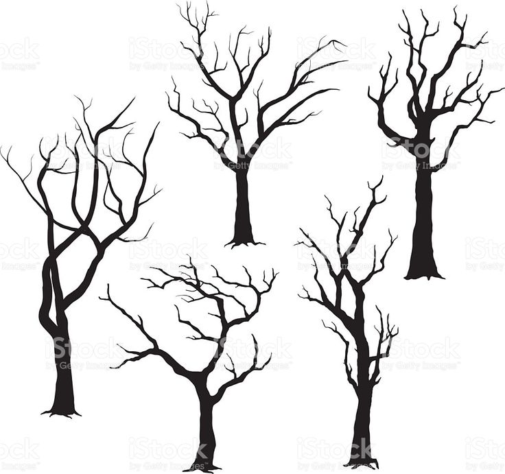 736x691 34 Best Z Tree Silhouettes Images On Silhouettes, Tree