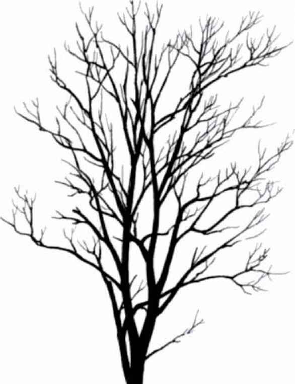 586x763 Tree Silhouettes