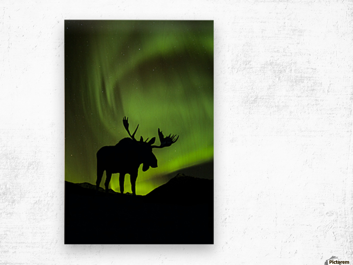 1200x900 Silhouette Of Moose With Green Aurora Borealis Behind It Interior