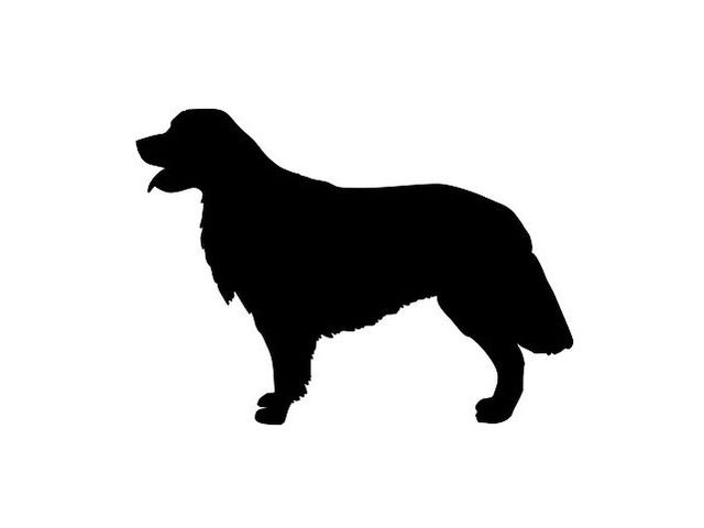 640x480 Quiz Can You Identify The Dog Breed By Its Silhouette