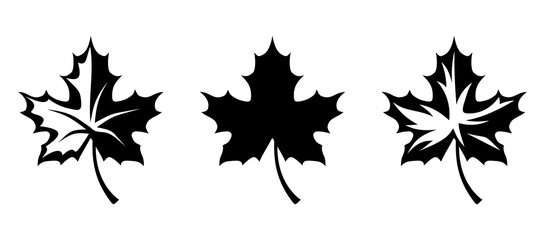 545x240 Autumn Leaves. Vector Black Contours.