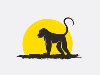 321x240 Search Photos Baboons